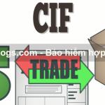 Một số chú ý khi mua bảo hiểm hợp đồng CIF